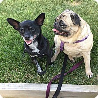 Adopt A Pet :: Dilly and Pickle - Greensboro, MD