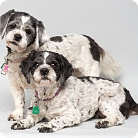 Adopt A Pet :: Katie and Abby - Westfield, NY