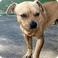 Adopt A Pet :: Luke - Saddle Brook, NJ