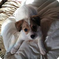 Adopt A Pet :: Bandit - La Verne, CA