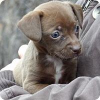 Adopt A Pet :: Noel (3 lb) Video! - Niagara Falls, NY