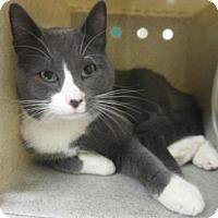 Adopt A Pet :: PAULIE - Reno, NV
