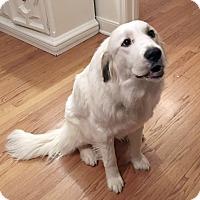 Adopt A Pet :: Muffin  *pending Adoption - Tulsa, OK
