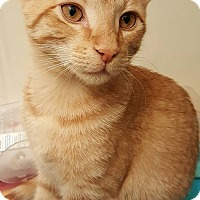 Adopt A Pet :: Critter - Waldorf, MD