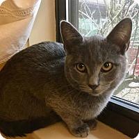 Adopt A Pet :: Karinna - Gainesville, FL