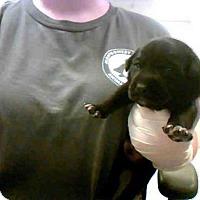 Adopt A Pet :: SEAN - Conroe, TX