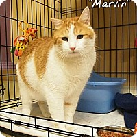 Adopt A Pet :: Marvin - Ocean City, NJ