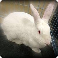 Adopt A Pet :: Stevie - Williston, FL