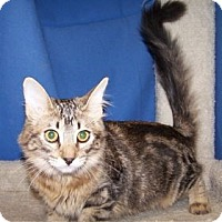 Adopt A Pet :: K-Rescue1-Hannah - Colorado Springs, CO
