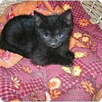 Adopt A Pet :: babby boy - Etobicoke, ON