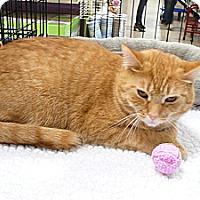 Adopt A Pet :: Molly - Springfield, PA