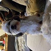 Adopt A Pet :: Doodle - Quincy, IN
