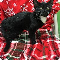 Adopt A Pet :: Carly - Addison, IL