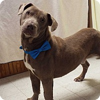 Adopt A Pet :: Tank - Shelby, MI