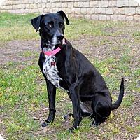 Adopt A Pet :: Millie - Granbury, TX