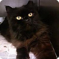Adopt A Pet :: MARTINI - Powder Springs, GA