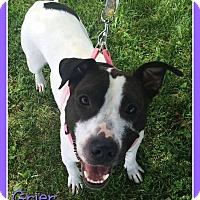 Adopt A Pet :: Grier - Elburn, IL