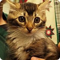Adopt A Pet :: Buzz - Grants Pass, OR
