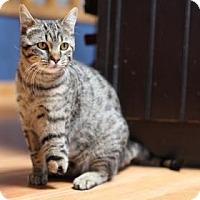 Adopt A Pet :: Simba - Wichita, KS