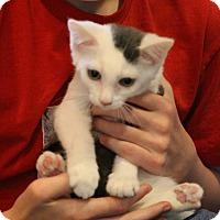 Adopt A Pet :: Arbyrd - Colorado Springs, CO