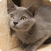 Adopt A Pet :: Carlton - Naperville, IL