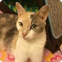 Adopt A Pet :: Penelope - Plymouth Meeting, PA