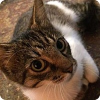 Adopt A Pet :: Moon Shadow - Toledo, OH