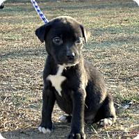 Adopt A Pet :: LULU/ADOPTED - PRINCETON, KY