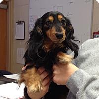 Adopt A Pet :: 2-3 Geno - Triadelphia, WV