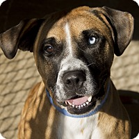 Adopt A Pet :: Blue - East Smithfield, PA