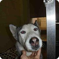 Adopt A Pet :: A045883 - Upland, CA