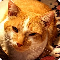 Adopt A Pet :: Mason - Spanish Fork, UT