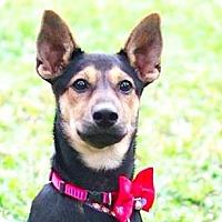 Adopt A Pet :: Sandra - San Ramon, CA