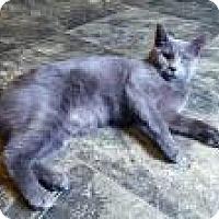 Adopt A Pet :: Violet - Fairmont, WV