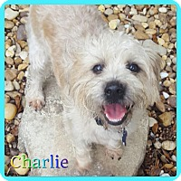 Adopt A Pet :: Charles - Hollywood, FL