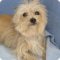 Adopt A Pet :: Chip - Tracy, CA