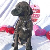 Adopt A Pet :: Jupp - West Chicago, IL