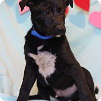 Adopt A Pet :: Barney - Waldorf, MD