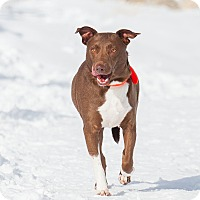 Adopt A Pet :: Copper - Washoe Valley, NV