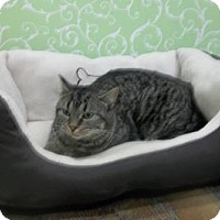 Adopt A Pet :: Twiggy - Red Wing, MN