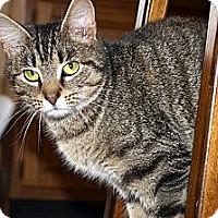 Adopt A Pet :: Christine - Xenia, OH