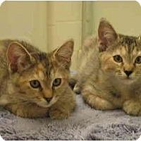 Adopt A Pet :: Pebbles & Bambam - Irvine, CA