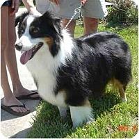 Adopt A Pet :: Lucy - Orlando, FL