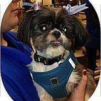 Adopt A Pet :: Diva - Playa Del Rey, CA