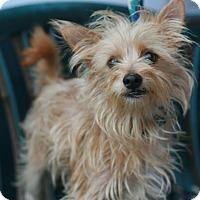 Adopt A Pet :: Boomer - Canoga Park, CA