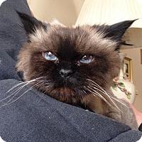 Adopt A Pet :: Mya - Mount Clemens, MI