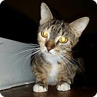 Adopt A Pet :: Lucky - Orlando-Kissimmee, FL