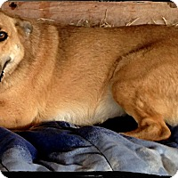 Adopt A Pet :: Hope - Johnson City, TX