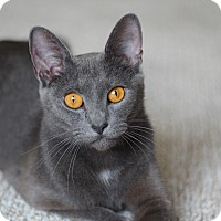 Adopt A Pet :: Sophia - Richmond, VA