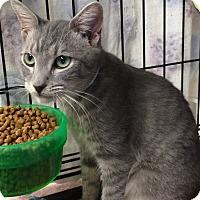 Adopt A Pet :: Greggie - Lunenburg, MA